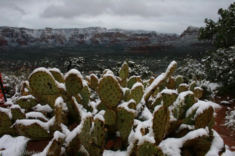 "I couldn't really get over the whole ""snow on a cactus"" thing."